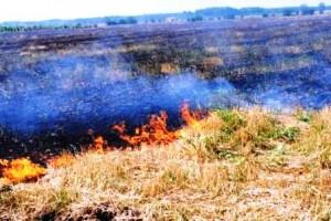 Sute de hectare distruse de  flăcări și vijelii