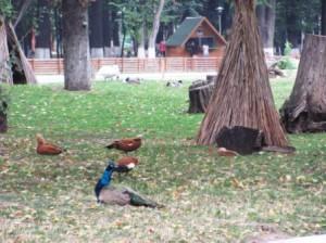 Grădină zoologică în Parcul Municipal