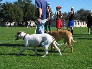 10.000 de lei amendă pentru proprietarii care nu şi-au microcipat câinii