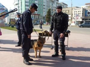 Jandarmii au avut zece misiuni pe zi, în 2013