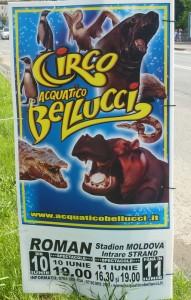 """Circul """"Acquatico Bellucci"""" a ajuns la Roman"""