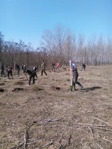 11 hectare de teren au fost reîmpădurite